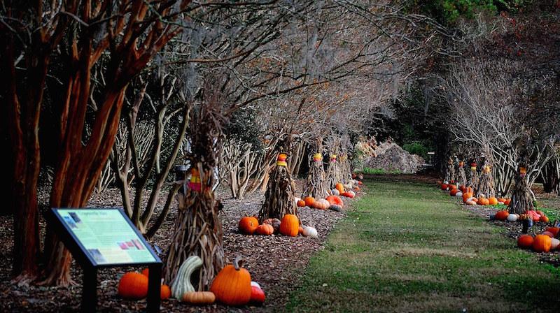 Autumn Gardenfest