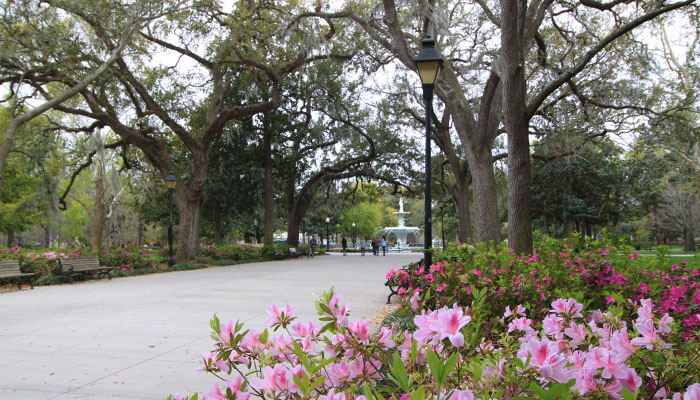 Azaleas at Forsyth Park in Savannah