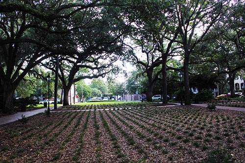 Calhoun Square in Savannah