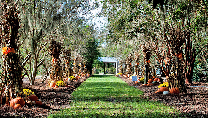 Georgia Garden: 20 Savannah Fall Festivals You Don't Want To Miss
