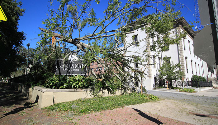 Fallen Tree on Savannah Law School Sign after Hurricane Matthew