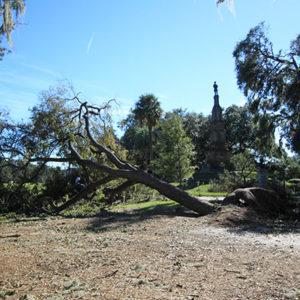 Forsyth Park Fallen Tree after Hurricane Matthew