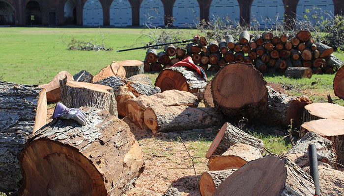Fort Pulaski Cut Trees after Hurricane Matthew