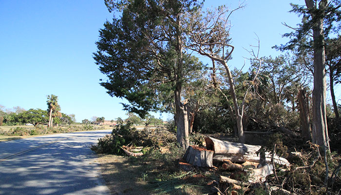 Fort Pulaski Tree Damage after Hurricane Matthew