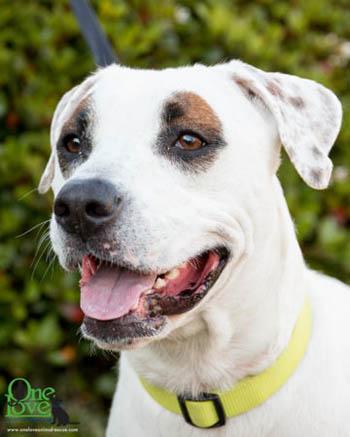 One Love Animal Rescue_Simon