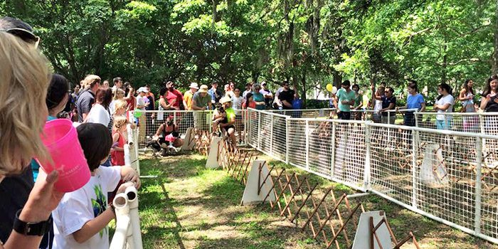 Savannah Doggie Carnival Race