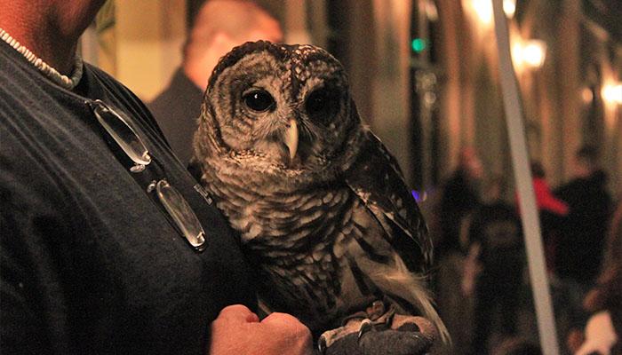 Savannah Holiday Series Animal Encounters with Oatland Wildlife Center