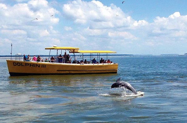 Get Out on the Water with Captain Mike's Dolphin Tours