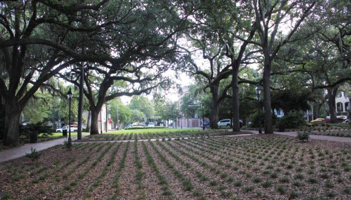 Calhoun Square